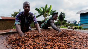 The TGCC Ghana project partnered USAID and Ecom Trading, Hershey Chocolate's Ghanaian cocoa supplier, is helping boost tenure security and cocoa production for vulnerable cocoa farmers like Khosa. Photo credit: Rena Singer